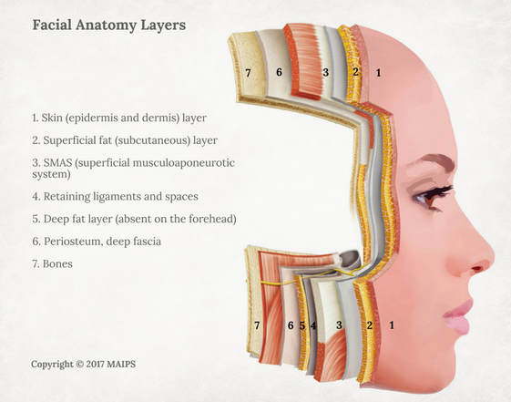 Facial anatomy layers (the layers of face): Skin, subcutaneous, SMAS, ligaments, deep fat, periosteum and deep fascia, bones